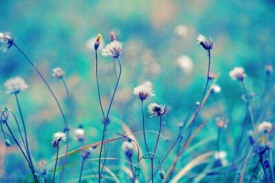 Poster Azul, vindima, herbário, campo