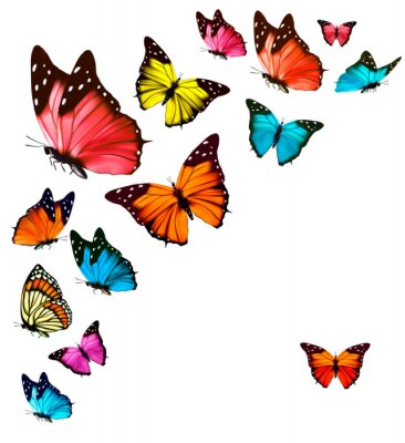 Poster Background with colorful butterflies. Vector.