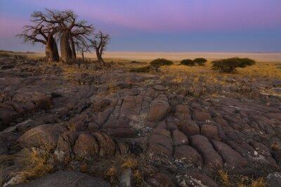Poster Baobabs, amanhecer, luz