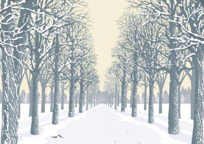 Poster Beco com árvores cobertas de neve silhuetas em um parque