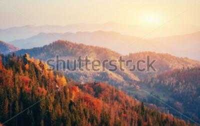 Poster Bela vista da floresta em um dia livre. Paisagem de outono Cárpatos. Ucrânia, Europa