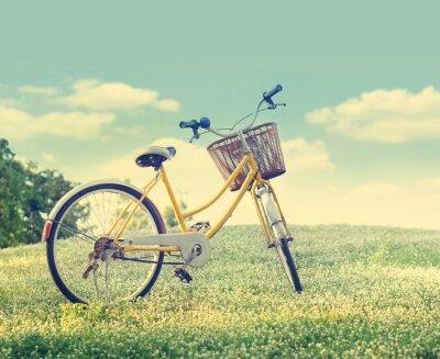 Poster Bicicleta no campo de flor branca e grama na luz do sol natureza fundo