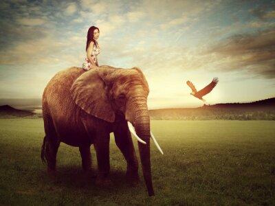 Poster Bonito, mulher, sentando, elefante