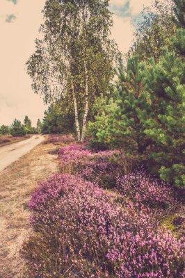 Poster Bonito, paisagem, floresta, florescer, urze, rural, estrada