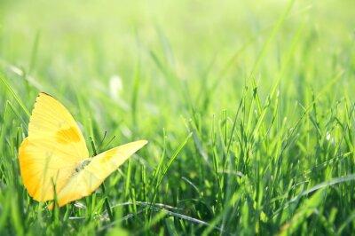 Poster Borboleta amarela na grama verde Fundo