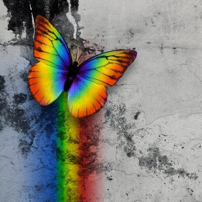 Poster borboleta do arco-íris