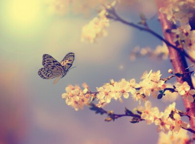 Poster Borboleta e flor de cerejeira