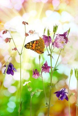 Poster Borboleta, flores, jardim, close-up