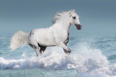 Poster Branco, árabe, cavalo, corrida, galope, ondas, oceânicos