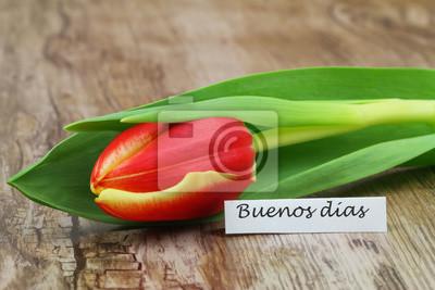 Buenos Dias Bom Dia Em Espanhol Com Tulipa Vermelha E