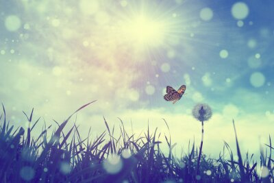 Poster Butterfly and dandelion