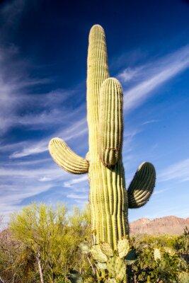 Poster Cactus Saguaro Majestic