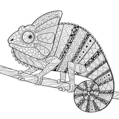 Poster Camaleão. Adulto antistress para colorir. Desenho desenhado mão preto e branco para colorir