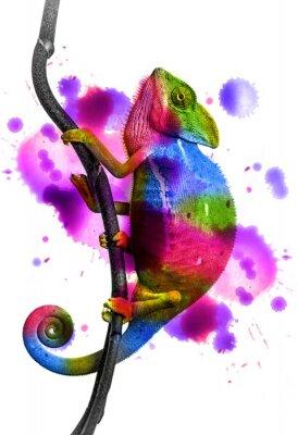 Poster Camaleão - cores
