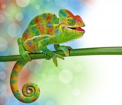 Poster camaleão e as cores