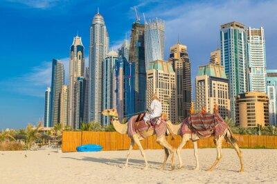 Poster Camel em Dubai Marina