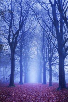 Poster Caminho em uma floresta escura e enevoada na Holanda