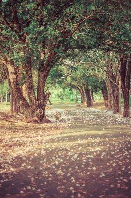 Poster Caminho sob o túnel de árvore com flores na atmosfera do vintage
