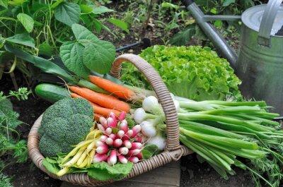 Poster Carrinho de légumes frais dans potager