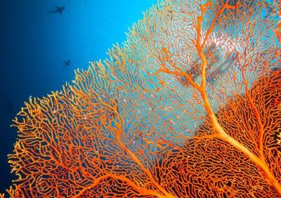 Poster Casal de mergulhadores no recife coral