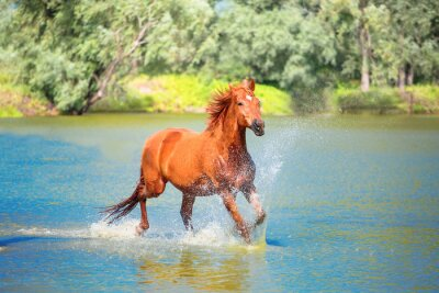 Poster cavalo