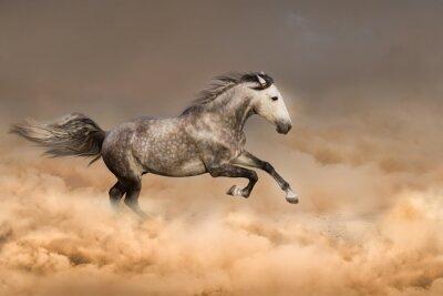 Poster Cavalo bonito funciona o galope na poeira