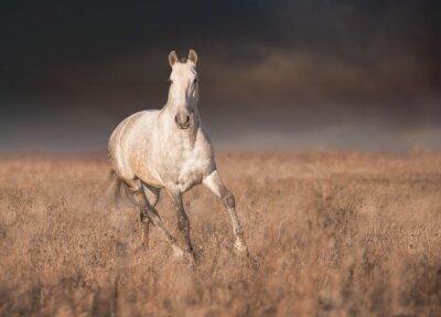 Poster Cavalo cinzento