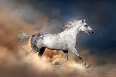 Poster Cavalo de Orlov corrida na poeira