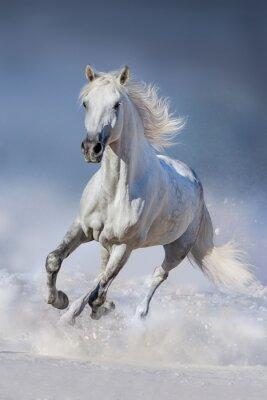 Poster Cavalo, neve