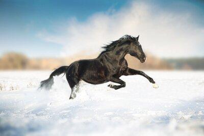Poster Cavalo preto corrida na neve