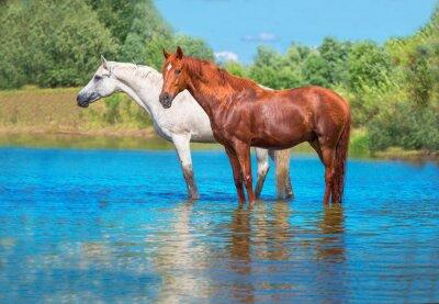 Poster cavalos