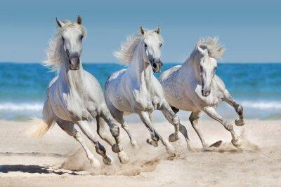 Poster Cavalos, executado, ao longo, costa