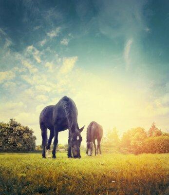 Poster Cavalos, Pastar, Outono, prado, fundo, árvores, céu