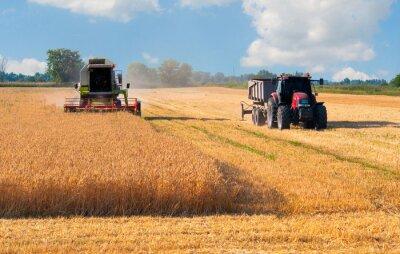 Poster Ceifeira-debulhadora e colheita trator de trigo no dia ensolarado de verão