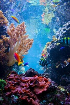 Poster Cena subaquática com peixes, recife de coral