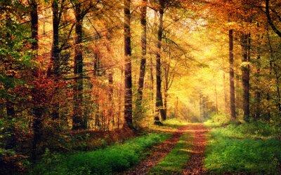 Poster Cenário da floresta do outono com raias de luz quente