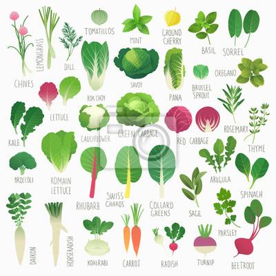 Poster Clip art, alimento, cobrança, Vol.1 :, legumes, ervas