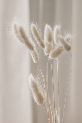 Poster Close-up of beautiful creamy dry grass bouquet. Bunny tail, Lagurus ovatus plant against soft blurred beige curtain background. Selective focus. Floral home decoration. Vertical.