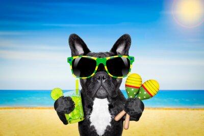 Poster Cocktail da praia do verão do cão