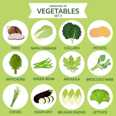 Poster Coleção de legumes, ilustração vetorial alimentos, ícone conjunto thr