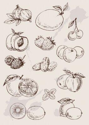 Poster coleção de manuais de desenho isolado frutas