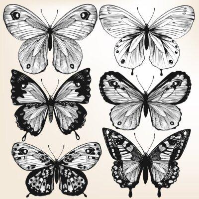 Poster Coleção do vetor mão puxado borboletas detalhadas para o projeto
