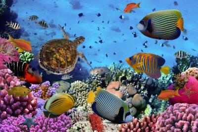 Poster Colorido, Coral, recife, muitos, Peixes