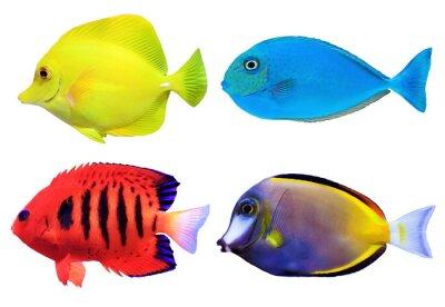 Poster Conjunto de fishs mar tropical