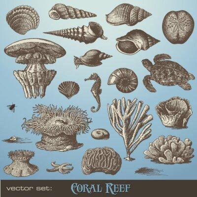 Poster conjunto de vetores: Recife coral - variedade de elementos de design do mar