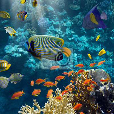 Poster Coral e peixes