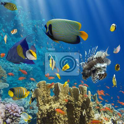 Poster Coral e peixes no Sea.Egypt Red