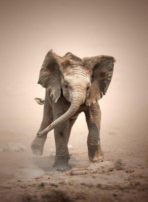Poster Cria de elefante cobrando zombado