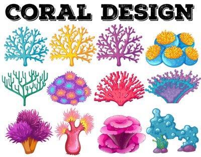 Poster Diferentes tipos de coral design