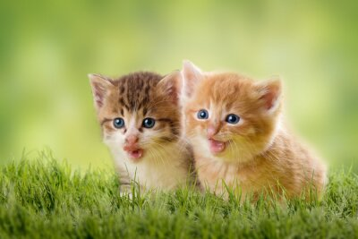 Poster dois gatinhos